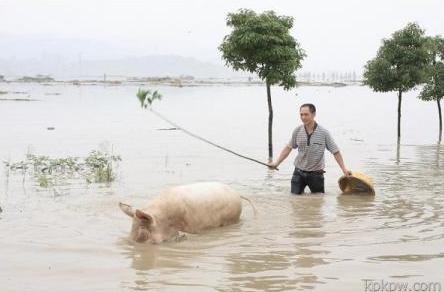 诸暨市江藻镇墨城坞村一养猪户的猪圈受淹