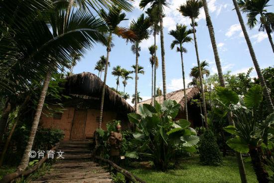 躲藏在椰树下的黎族房屋