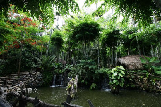 浓密的树林