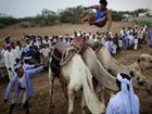 也门特色跳骆驼