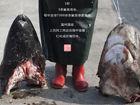 组图:探访浙江神秘鲨鱼村
