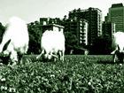 大学操场养小羊