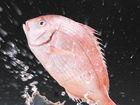 4种方式吃鱼会短命