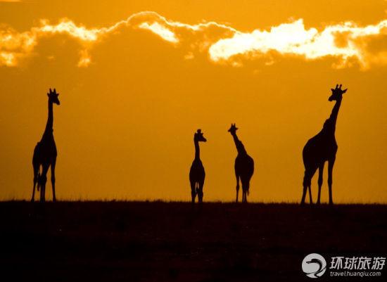 马塞马拉国家保护区——肯尼亚
