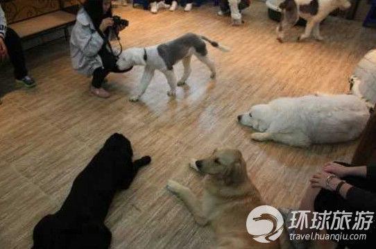 韩国狗狗咖啡馆