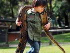 澳2岁男童与蟒蛇为伴
