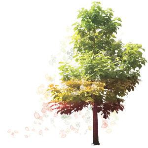 秋天的树叶(点击更多高清美图)