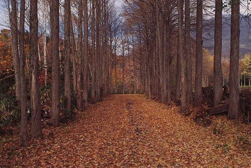 给你西湖边的家 秋天的树叶(                ) 落叶美景