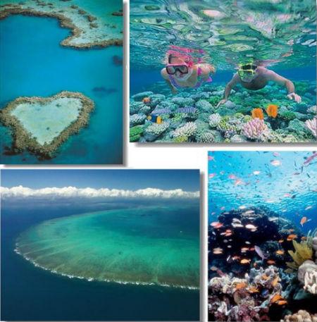 壁纸 海底 海底世界 海洋馆 水族馆 450_457