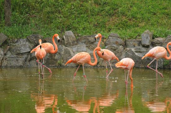 杭州野生动物世界:杭州野生世界规划占地面积3500亩,为华东地区规模最大的野生动物世界。园内的动物约有200种,1万多头(只),其中园内国外的珍稀动物约占70%,共有3个演艺场。野生动物世界以自然为主题、以山峦沟壑为背景、以野生动植物为特色、以开放展出为主要方式,向游客们展示了大自然最真实生动的一面。   这里的动物世界完全摒弃传统动物园的管理模式,让人在充分感受野趣和情趣的同时,获得更多的科普知识和生态知识,营造人与动物和睦相处的氛围,从而使人领略回归大自然的乐趣。   龙门古镇:龙门古镇地处