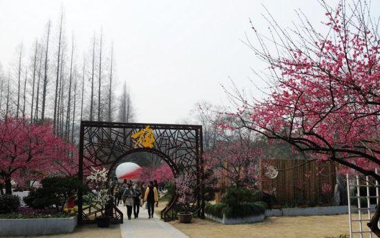 杭州植物园 梅花