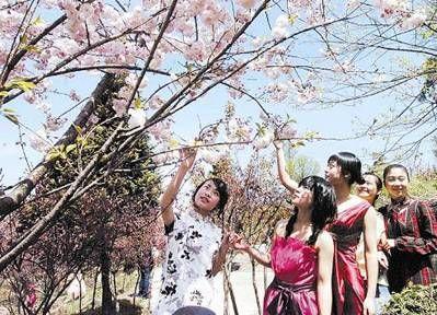 宁波四明山 樱花