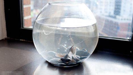 两条金鱼(点击更多高清美图)