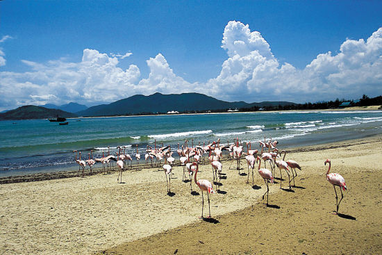 海南兴隆热带植物园(点击更多高清美图)