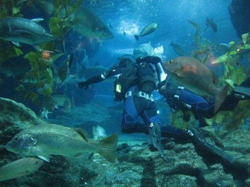 海底(点击更多高清美图)