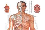 标准人体经络穴位图