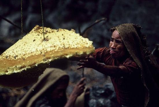 尼泊尔猎蜜人
