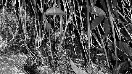 杭州植物园有毒蛇出没 提醒勿去阴凉潮湿处