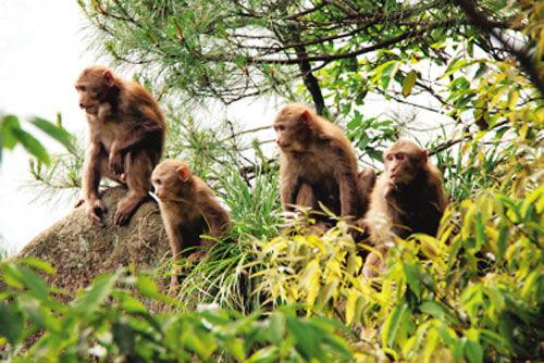 猴子(点击更多高清美图)