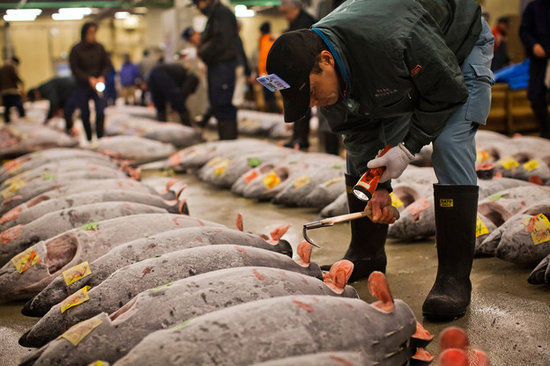 东京筑地鱼市场