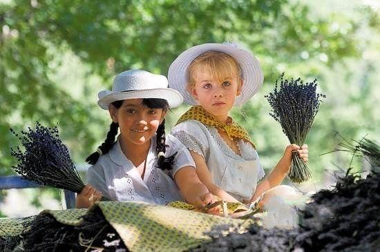 法国普罗旺斯薰衣草节