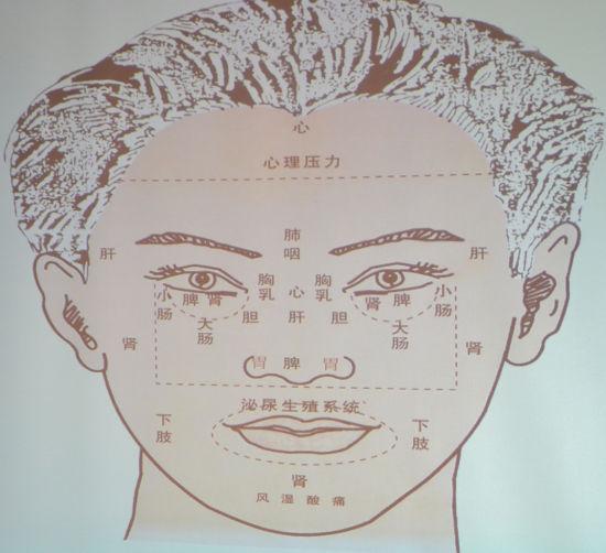 人体脸部结构图解