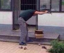 杭州犬类收容中心饲养员摔死七只小狗