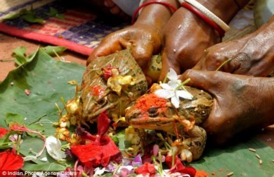 青蛙的婚礼