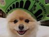 控诉窃取宠物照片