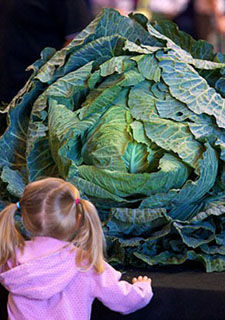 英国举办巨型蔬菜展