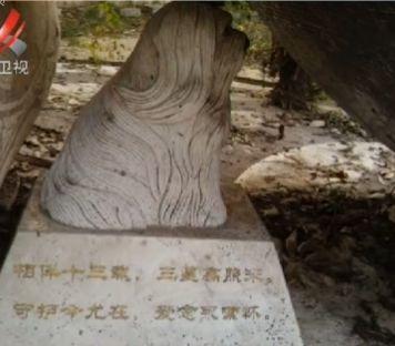 视频:南京某小区现豪华狗墓地 价值超500万